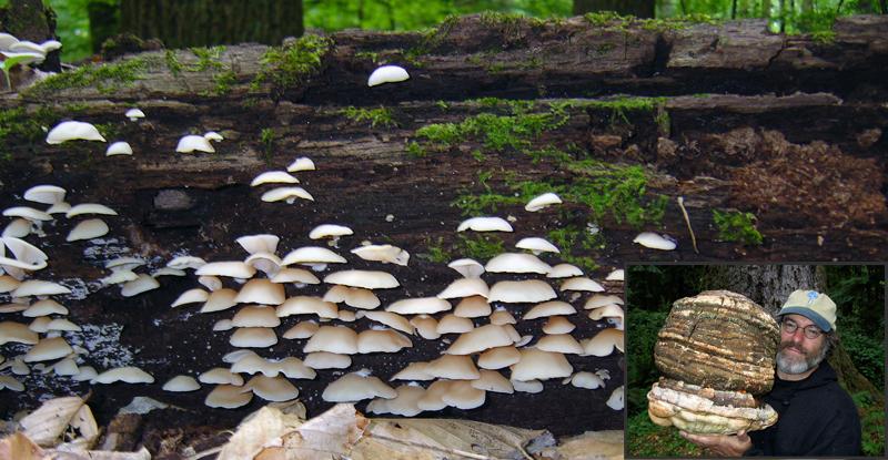 Paul Stamets – The #1 Mushroom Expert